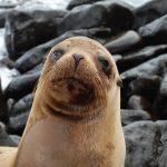 Vad händer när på Galapagos